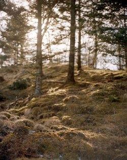 Hillock, Kjerringøy